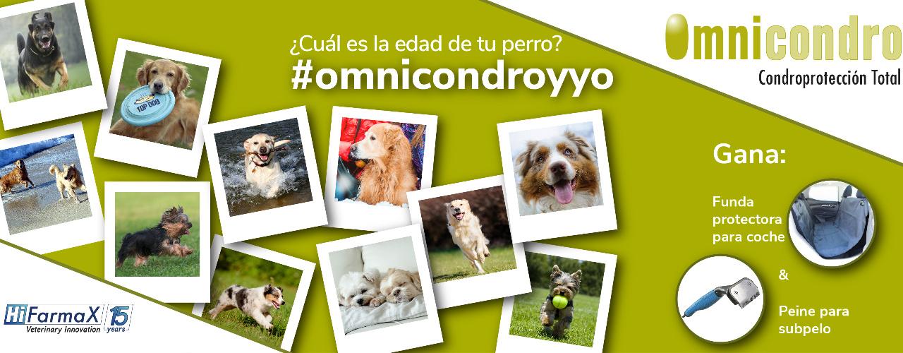 Omnicondro promueve la relación entre propietarios y veterinarios
